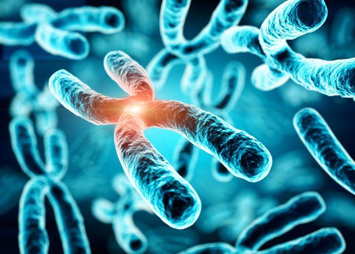 Kromozomlar hakkında önemli bilgiler