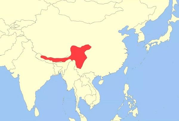 Kırmızı pandanın global dağılımı