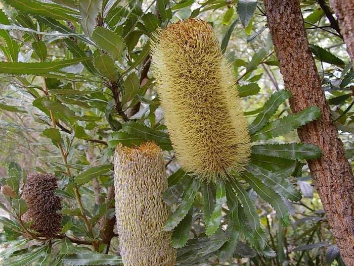 Avustralya ve Yeni Zelanda'nın bitki zenginliği