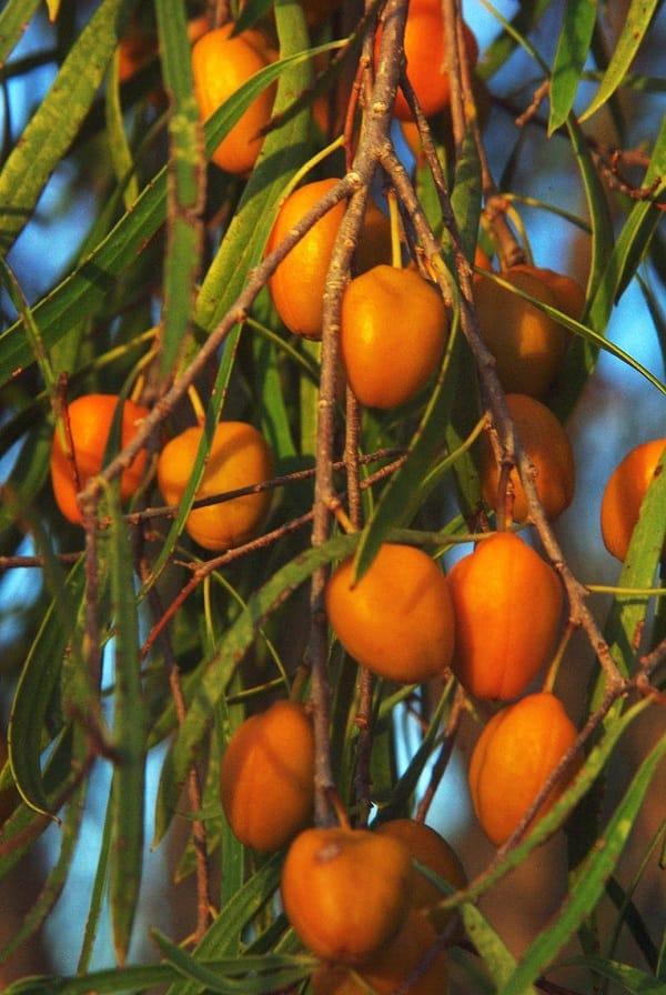 Yeni Zelanda'nın bitki zenginliği