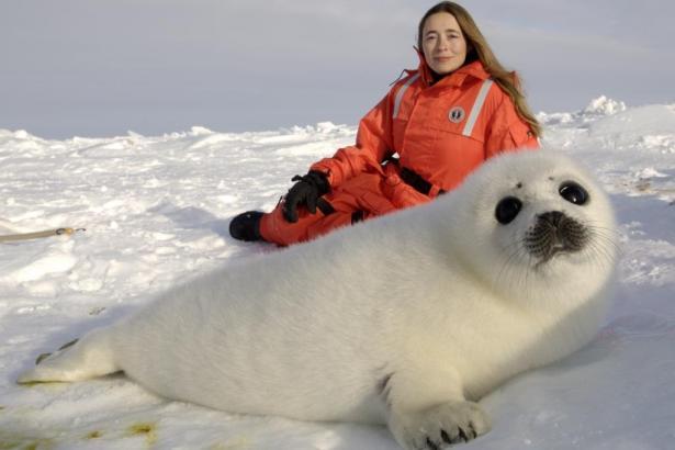 Düzinelerce fok balığı Kanada'da bir kasabaya giriş yaptı
