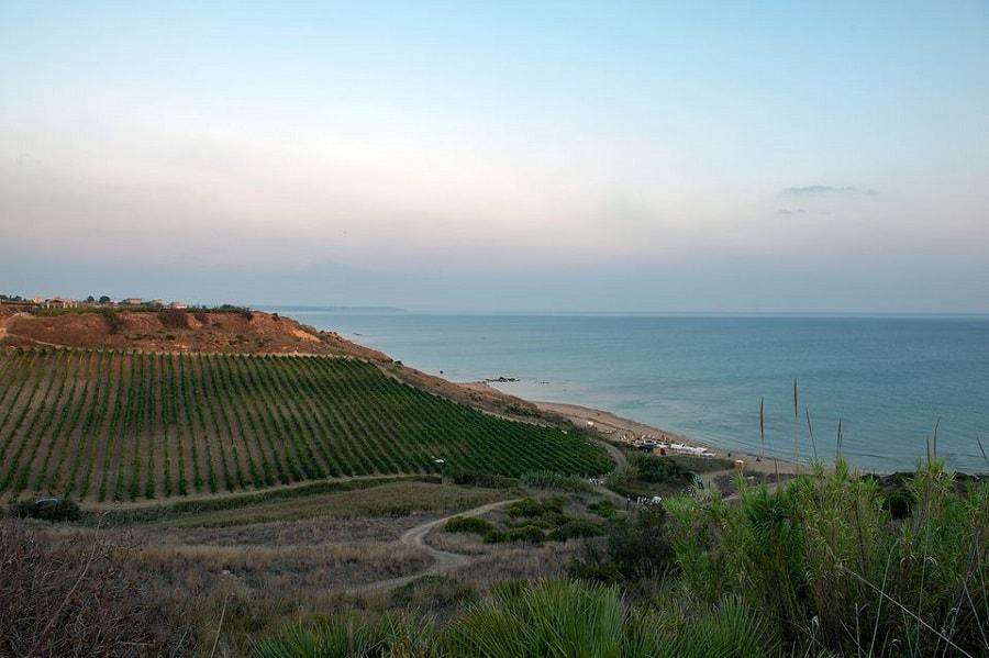 Sicilya'da şarabın tarihi