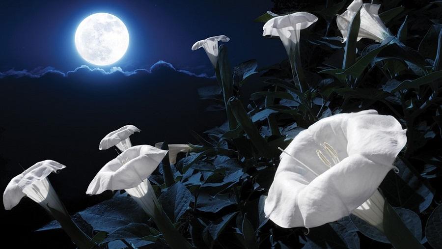 Ay'da yetişen ilk bitki sıcak havaya yenildi