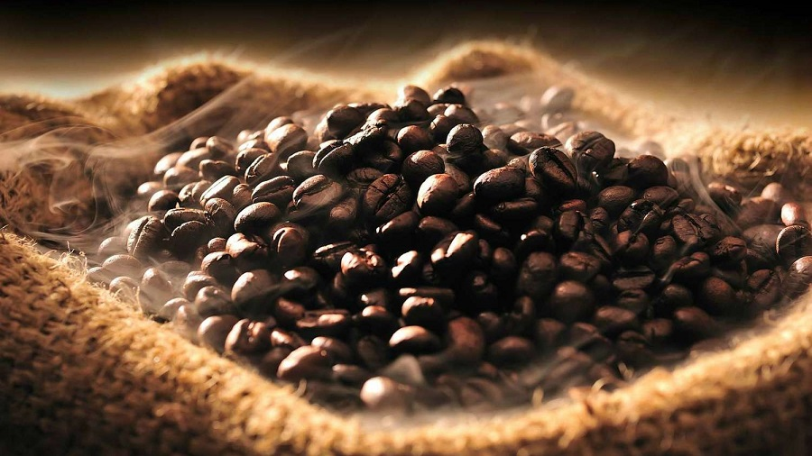 genetiği değiştirilmiş kahveler