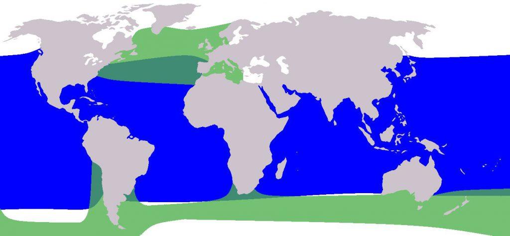 pilot balina dağılımı