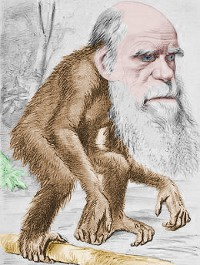 darwin maymun