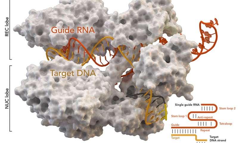 Yeni CRISPR