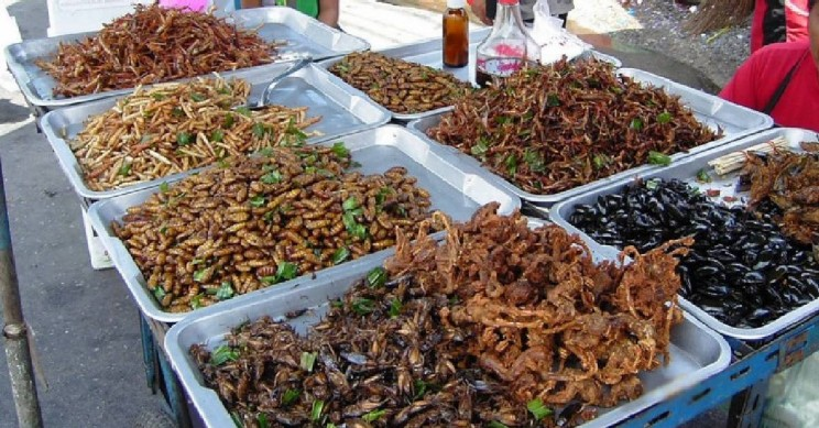 böcek yemek yiyecek besin