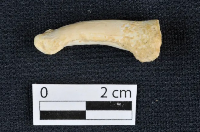Yeni insan türü ayağı Homo luzonensis