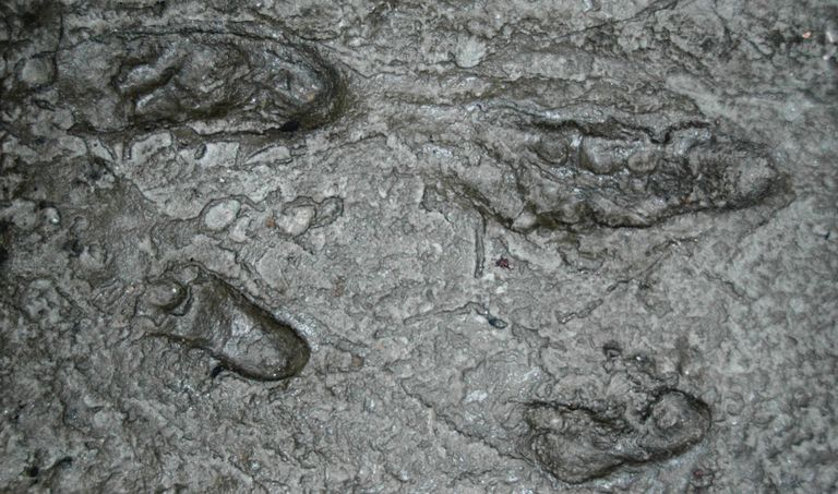 en eski ayak izi maymun insan 3.5 milyon yıl laetoli