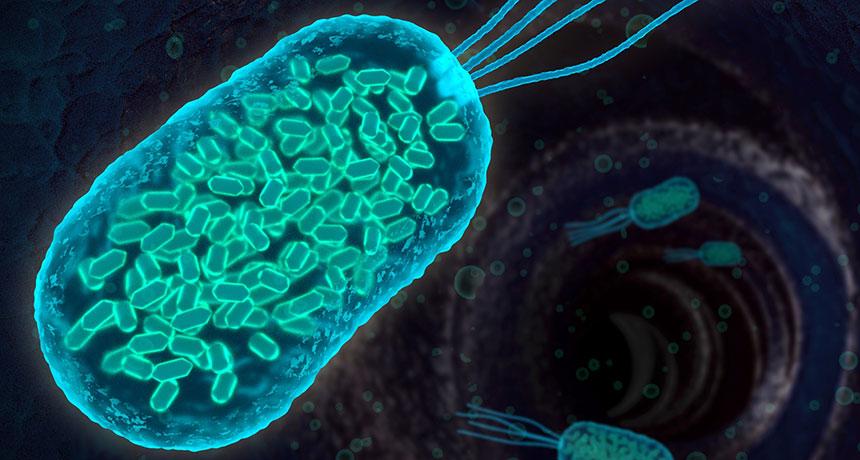 antibiyotiğe dirençli bakteri