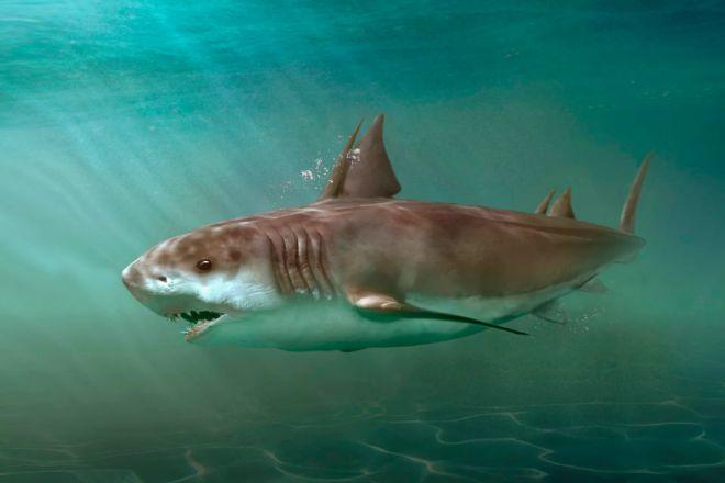 köpek balığının evrimi Hybodus