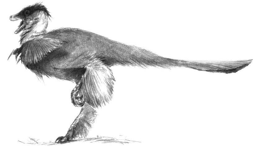 Teropod