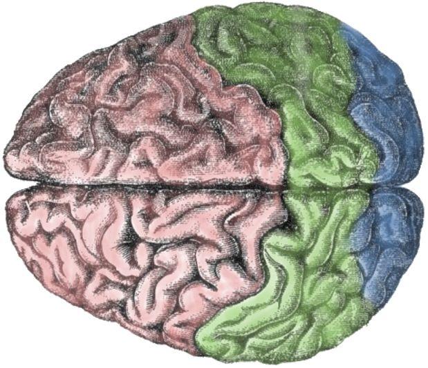 mutluluk ve beyin