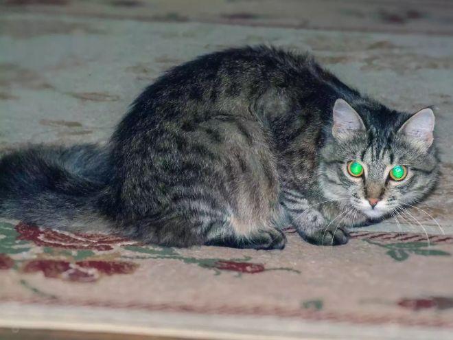 Kediler karanlıkta görebilir mi?