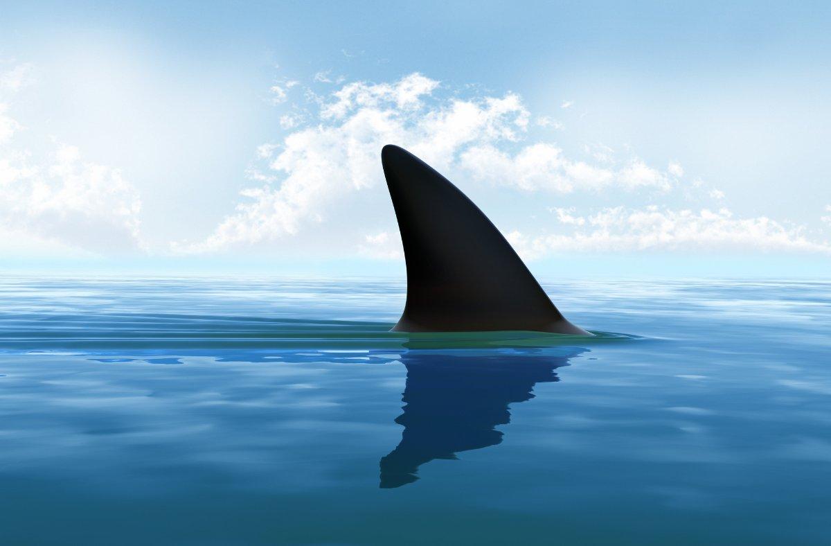 köpek balığının evrimi