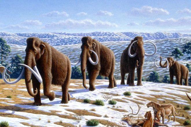 tüylü mamut