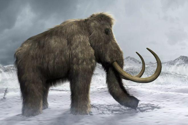 Yünlü mamut