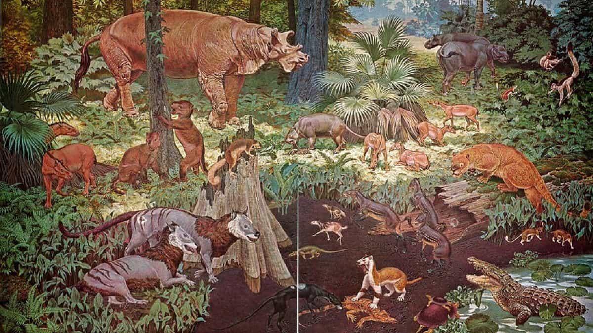 iklim değişikliği hayvanlar