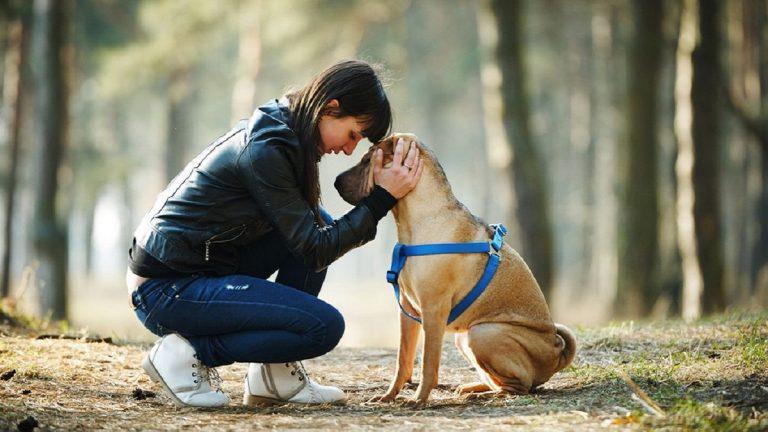Köpek sahibi olmak kalp sağlığını iyileştiriyor