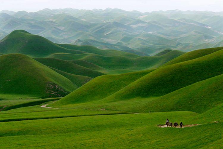 Afganistan yeşil kırlar