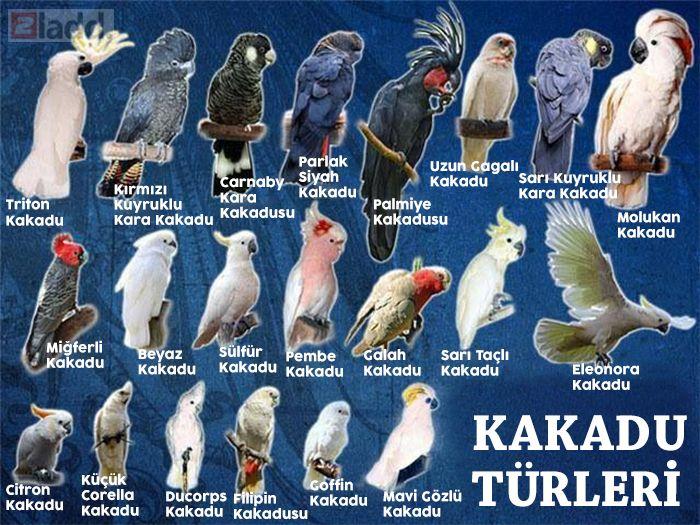 tüm türleri