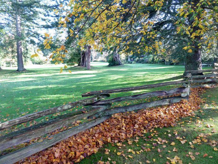 Çınar yapraklı akçaağaç havayı en fazla temizleyen ağaçlardan
