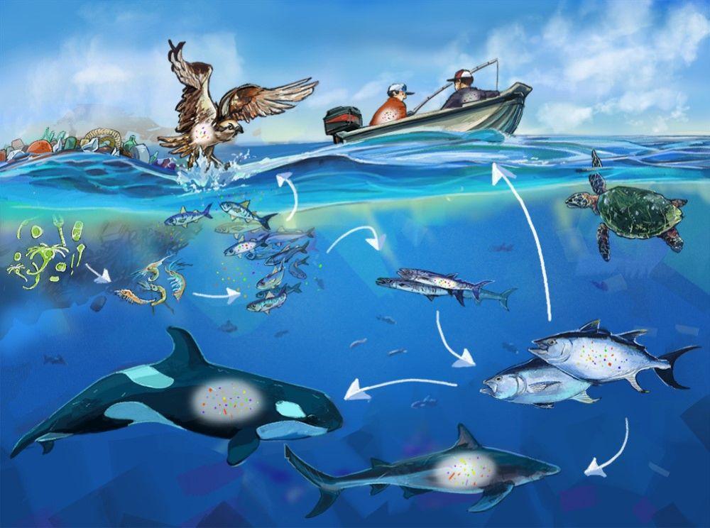 Büyük Pasifik çöp alanı denizdeki canlılığı tehdit ediyor