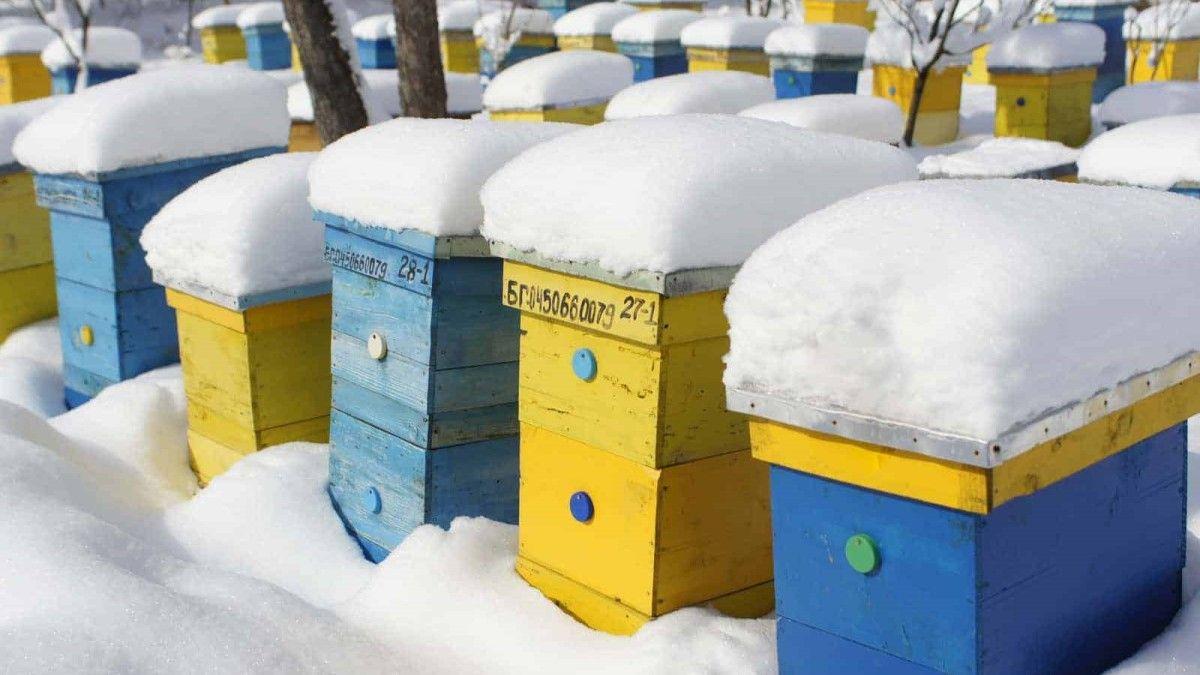 bal arıları kışın nasıl hayatta kalır?