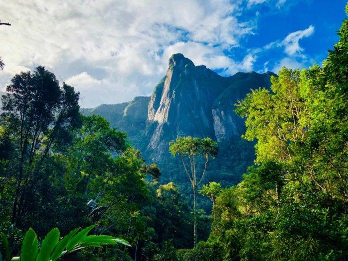 Madagaskar'ın Marojejy yağmur ormanları