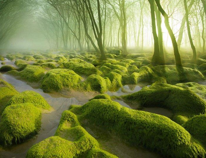 yosun bataklığı