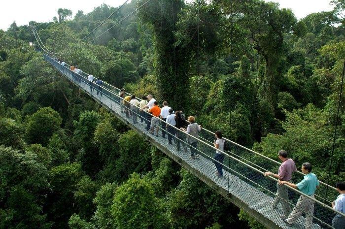 yağmur ormanlarına sahip