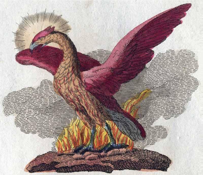 Friedrich Justin Bertuch tarafından anka kuşu tasviri, 1806