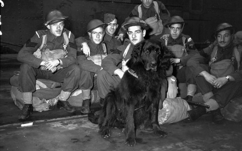 gander savaş köpeği