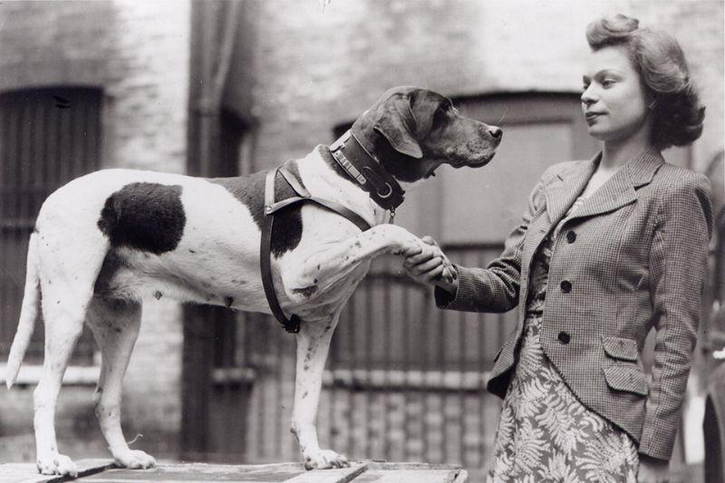 judy savaş köpeği