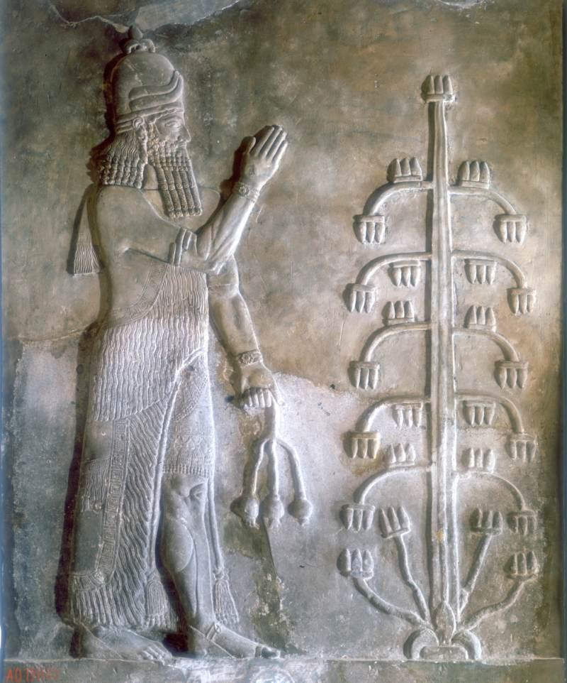 Sargon'un hayat ağacının önünde duran MÖ 24-23. yüzyıla ait taş kabartması.