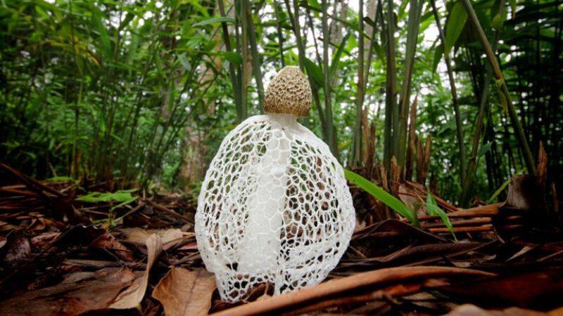 Tropik yağmur ormanında bir mantar.