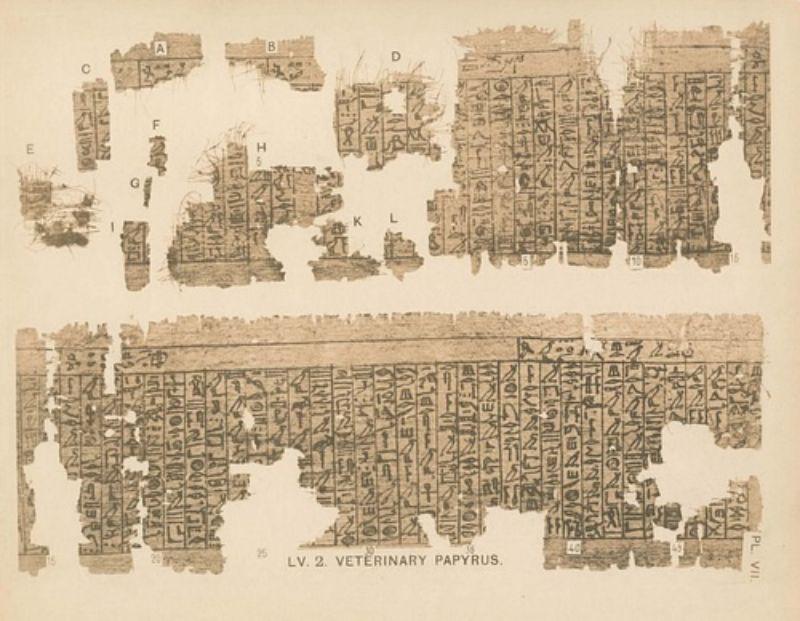 Kahun veterinerlik papirüsü.