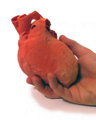 3d basılmış kalp.