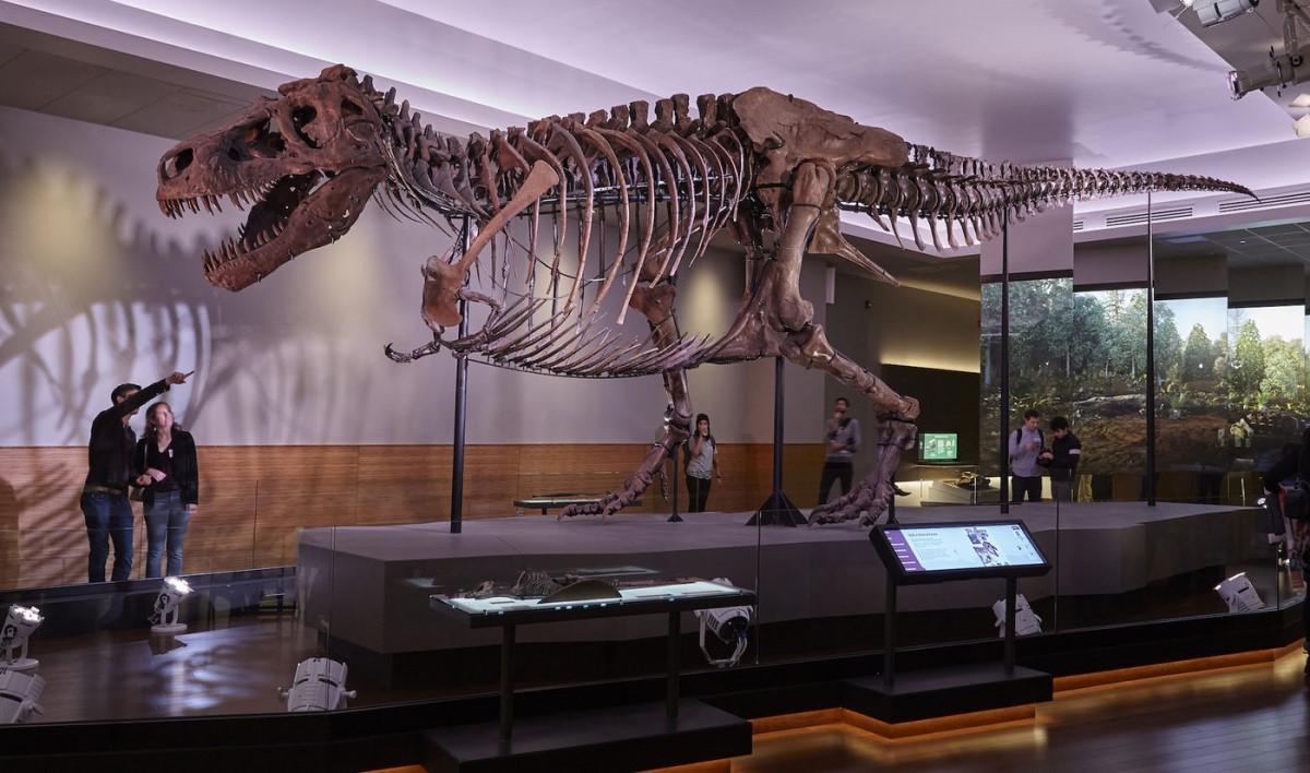 en gerçek dinozor fosili olan sue dinozoru