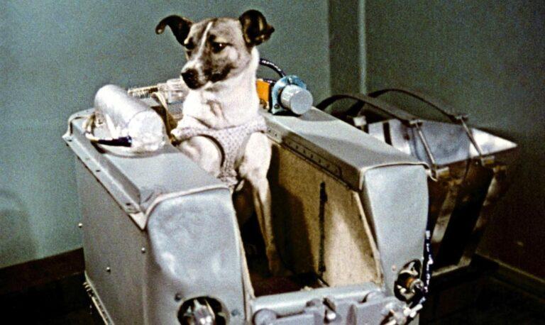 laika köpeği