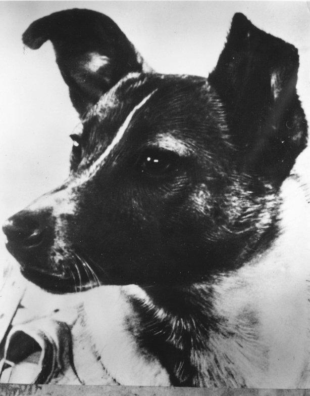 Vladimir Yazdovsky, Laika'yı çocuklarıyla oynaması için evine götürdü, daha sonra sorulduğunda köpek için güzel bir şeyler yapmak istediğini söyledi.