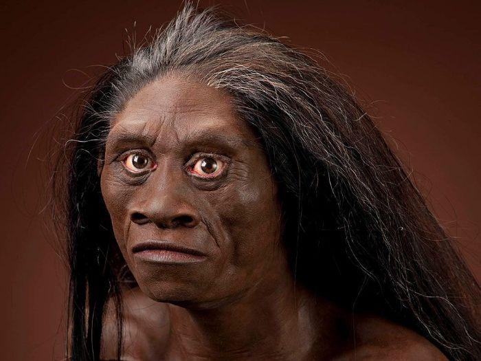 50.000 yıl öncesine kadar yaşamış olabilecek küçük bir erken insan olan Homo floresiensis'in yüz rekonstrüksiyonu.