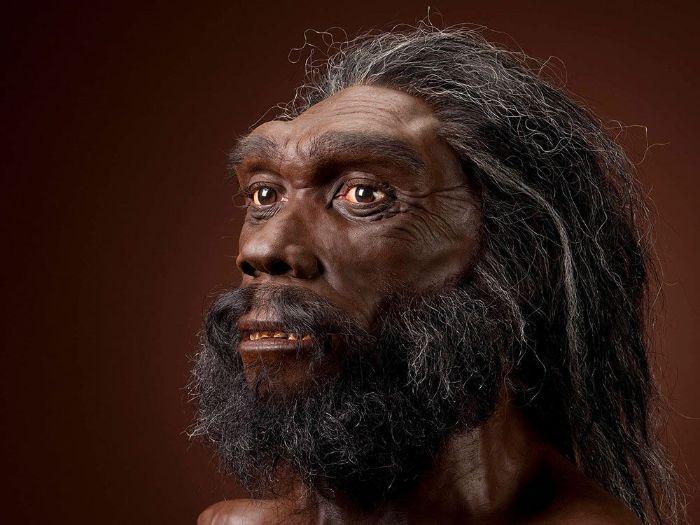 Modern insan, Neandertal ve Denisovalıların ortak atası olmaya aday olan Homo heidelbergensis'in yüz rekonstrüksiyonu.