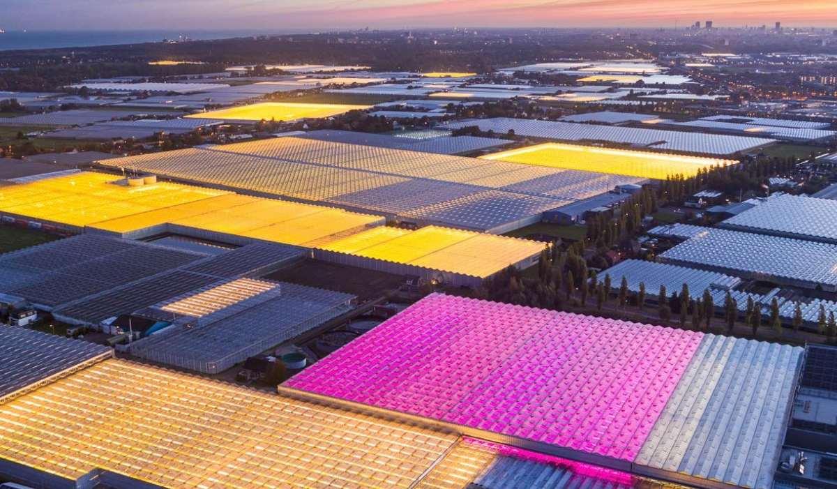 hollanda'nın tarımdaki başarısı