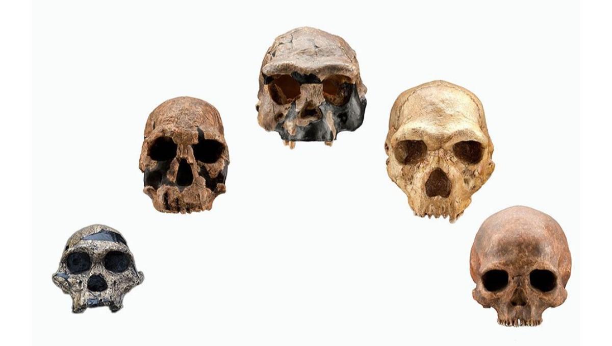 homo sapiens'in evrimi
