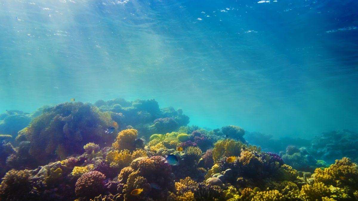 okyanusu keşfetmek