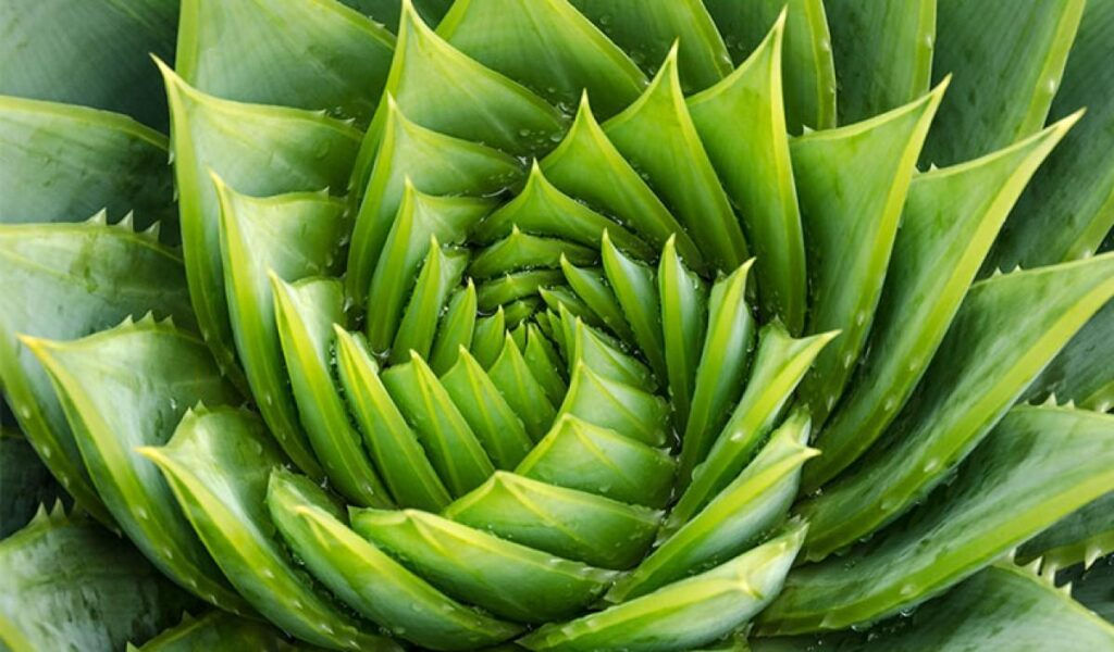 fibonacci dizisi