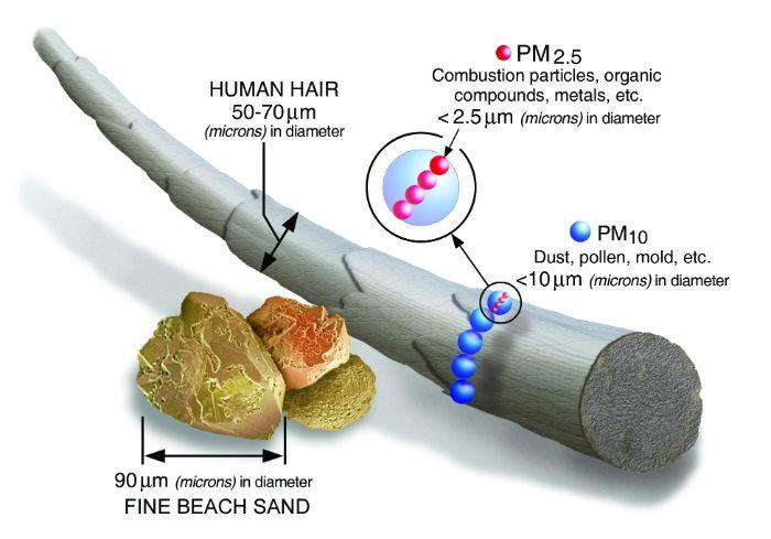 Orman yangınlarında partikül kirliliğine yol açan ve akciğere dolan parçacıkların saç teli ile boyut karşılaştırması.