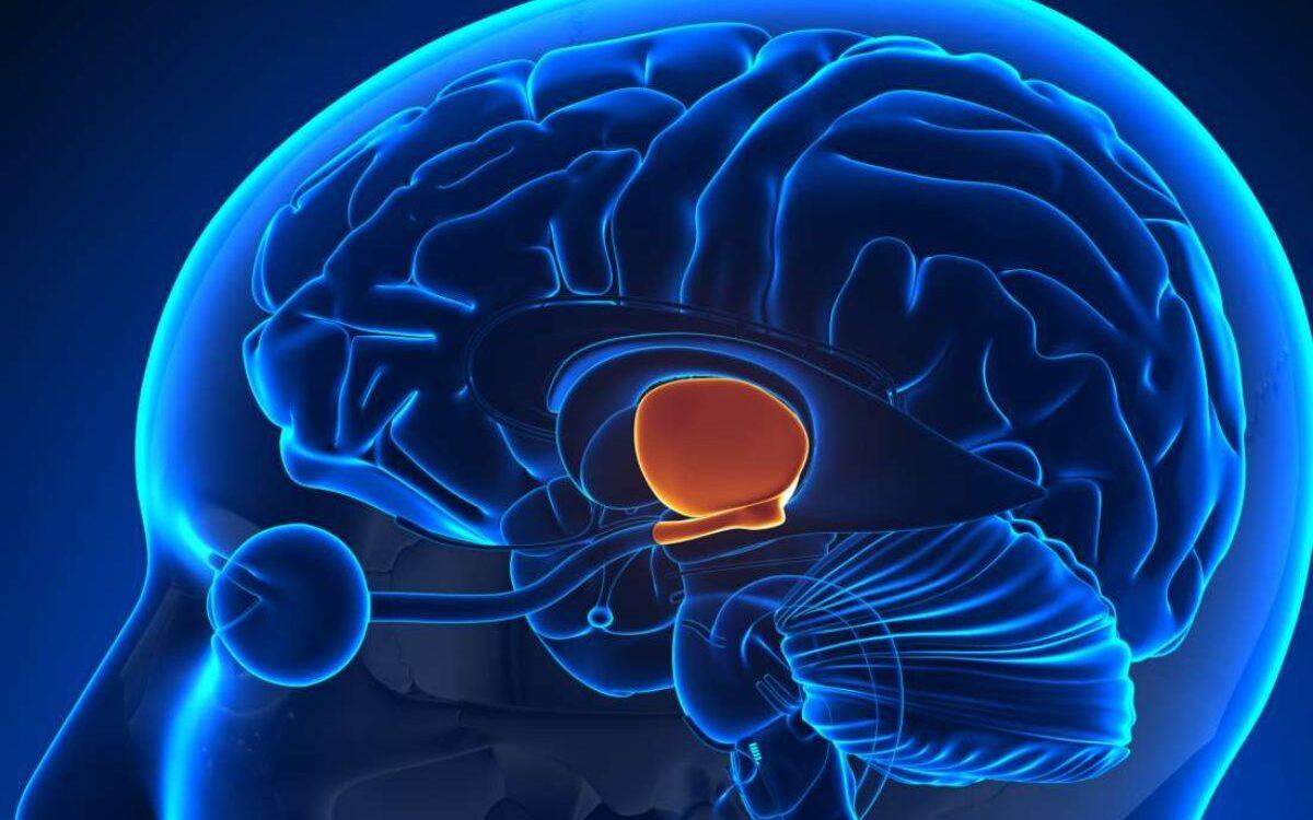 hipotalamus ve iştah